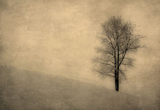 Vintage image of a tree over grunge background Royalty Free Stock Image