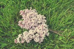 Vintage image of violet lilac flowers on the green grass, shot from directly above Stock Images
