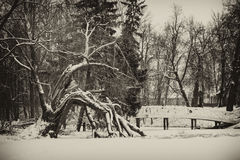 Vintage image of winter landscape. With bridge and broken tree Royalty Free Stock Image