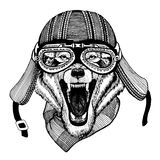 Vintage Image of WOLF for t-shirt design for motorcycle, bike, motorbike, scooter club, aero club. Hand drawn picture Royalty Free Stock Image