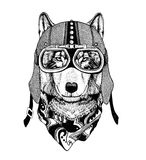 Vintage Image of WOLF for t-shirt design for motorcycle, bike, motorbike, scooter club, aero club. Hand drawn picture Royalty Free Stock Photography