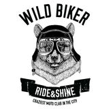Vintage images of black Bear for t-shirt design for motorcycle, bike, motorbike, scooter club Royalty Free Stock Photography
