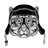 Vintage images of fishing cat for t-shirt design for motorcycle, bike, motorbike, scooter club, aero club Stock Images
