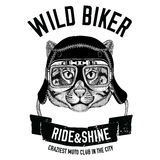 Vintage images of fishing cat for t-shirt design for motorcycle, bike, motorbike, scooter club, aero club Royalty Free Stock Photos