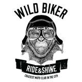 Vintage images of gorilla monkey for t-shirt design for motorcycle, bike, motorbike, scooter club, aero club Stock Image