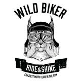 Vintage images of Lynx or bobcat for t-shirt design for motorcycle, bike, motorbike, scooter club, aero club. Vintage images of Lynx or bobcat for t-shirt design Royalty Free Stock Image