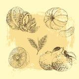 Vintage Ink hand drawn collection of citrus fruits sketch - lemon, tangerine, orange Stock Photo