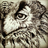 Vintage ink  owl Royalty Free Stock Photo