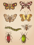 Vintage insects Royalty Free Stock Photo