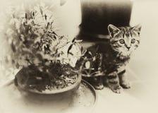 Vintage Kitten royalty free stock photos