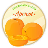 Vintage label with apricots isolated on white background in cartoon style. Vector illustration. Fruit and Vegetables Stock Photography