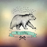 Vintage label bear. Design for T-Shirt.   Stock Images