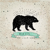 Vintage label bear. Design for T-Shirt.   Stock Photos