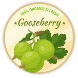 Vintage label with gooseberry isolated on white background in cartoon style. Vector illustration. Fruit and Vegetables Stock Photos