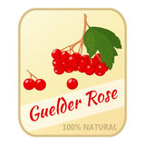 Vintage label with guelder rose isolated on white background in cartoon style. Vector illustration. Berries Collection. Royalty Free Stock Image