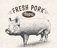 Vintage label with pig Stock Images