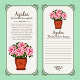 Vintage label with potted flower azalea Royalty Free Stock Photos