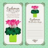 Vintage label with potted flower cyclamen Stock Photos