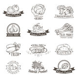 Vintage label with vegetables hand drawn Stock Photos
