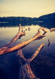 Vintage lake sunset with old dead tree trunk Stock Images