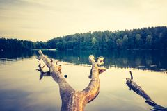 Vintage lake sunset with old dead tree trunk Stock Photography