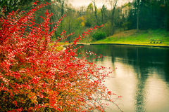 Vintage landscape lake shrubs and trees in the park in autumn Royalty Free Stock Photography