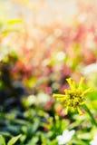 Vintage landscape nature flower background Royalty Free Stock Image