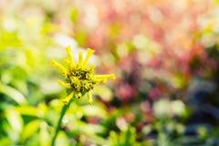 Vintage landscape nature flower background Stock Images