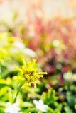 Vintage landscape nature flower background Royalty Free Stock Images