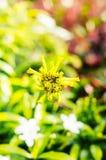 Vintage landscape nature flower background Stock Image