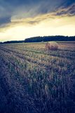 Vintage landscape of straw bales on stubble field Royalty Free Stock Photography