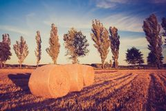 Vintage landscape of straw bales on stubble field Stock Photos