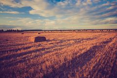 Vintage landscape of straw bales on stubble field Stock Images