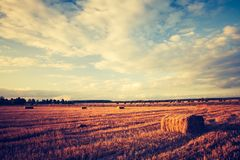 Vintage landscape of straw bales on stubble field Stock Image