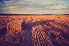 Vintage landscape of straw bales on stubble field Royalty Free Stock Photo