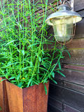 Vintage lantern and green plant in a rusty pot Royalty Free Stock Images