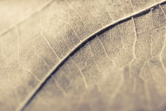 Vintage leaf Royalty Free Stock Photography