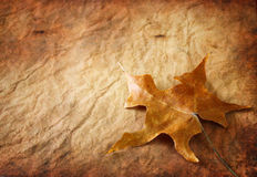 Vintage leaf background. single brown leaf against textured background. Royalty Free Stock Photos