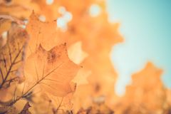 Vintage leaves in autumn forest, calming colors and mood. Beautiful vintage leaves of autumn. Seasonal nature concept, soft colors royalty free stock images