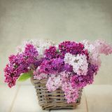 Vintage Lilac Flowers Bouquet in Wisker Basket royalty free stock image