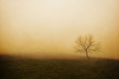 Vintage lonely tree Royalty Free Stock Photography