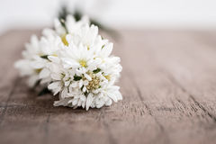 Vintage look, Chamomile on woodden board Royalty Free Stock Images