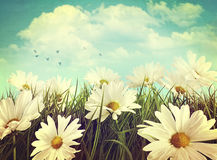 Vintage look of daisies in grass