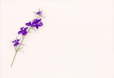 Vintage look flower Stock Photography