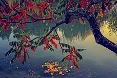 Vintage look with tree in autumn on the river shore Stock Photos