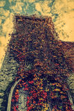 Vintage look with vegetation fall on a tower stock images