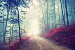 Vintage magic forest road Royalty Free Stock Images