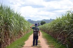 A vintage man backpacker is walking for travel in the country road jungle side summer time in Kanchanaburi royalty free stock images