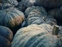 Vintage with many pumpkins. For fruit or for cooking and concept closeup royalty free stock photo