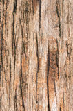 Vintage marrom de madeira velho do fundo da textura Imagem de Stock